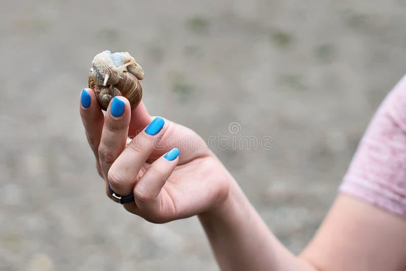 拿着蜗牛的妇女手 免版税库存图片