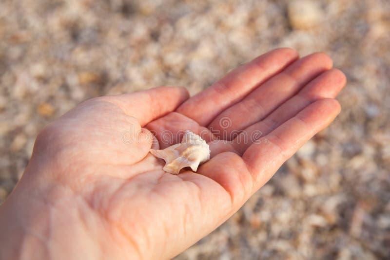 拿着贝壳的妇女的手 免版税图库摄影