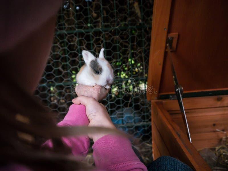 拿着逗人喜爱的小兔子的女孩 免版税库存照片