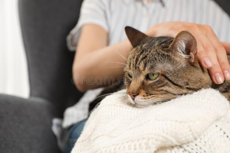 拿着逗人喜爱的虎斑猫的所有者户内 友好的宠物 库存照片