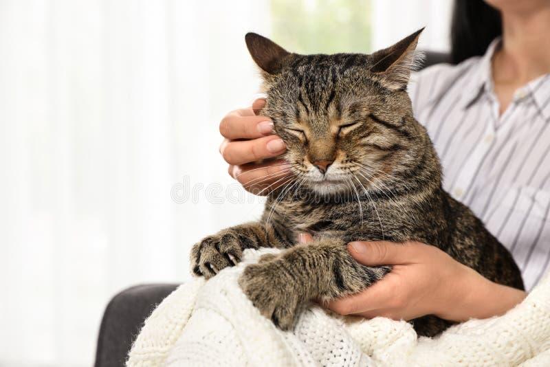 拿着逗人喜爱的虎斑猫的所有者户内 友好的宠物 库存图片