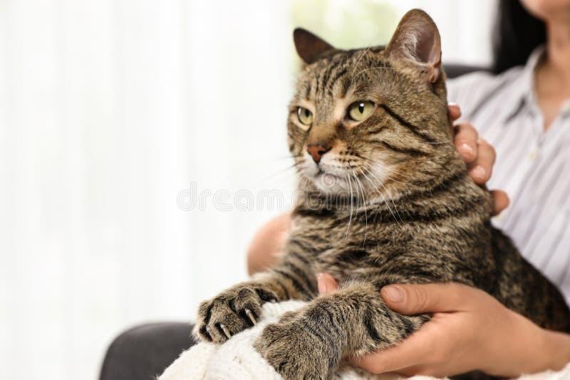拿着逗人喜爱的虎斑猫的所有者户内 友好的宠物 免版税库存照片
