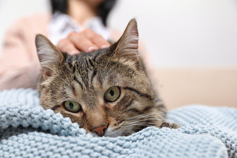 拿着逗人喜爱的虎斑猫的所有者 友好的宠物 图库摄影