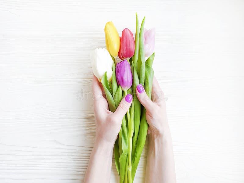 拿着郁金香概念的花束浪漫礼物在白色木背景的女性手 图库摄影