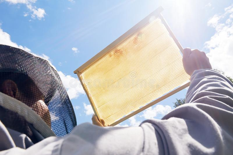 拿着金黄蜂窝的养蜂家 免版税库存图片