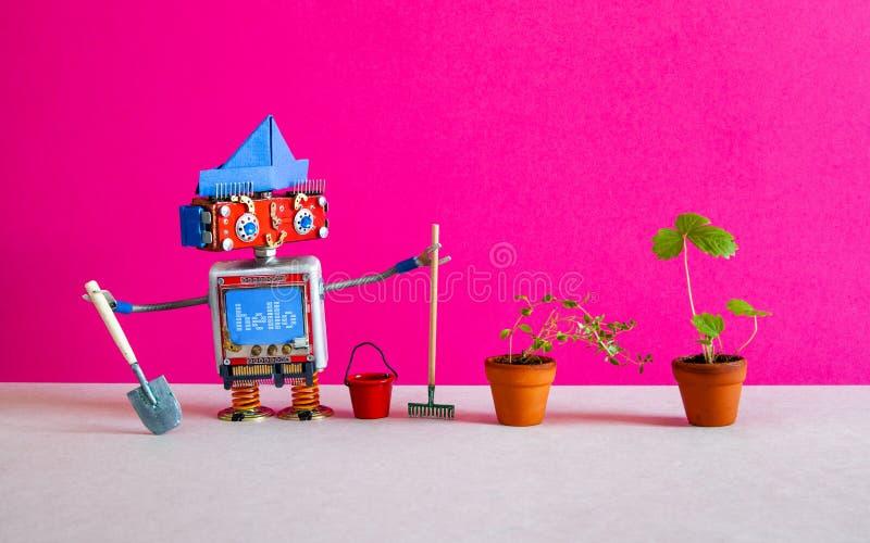 拿着铁锹和犁耙的愉快的机器人花匠交配动物者农艺师 机器人看看草莓和麝香草植物 免版税库存图片