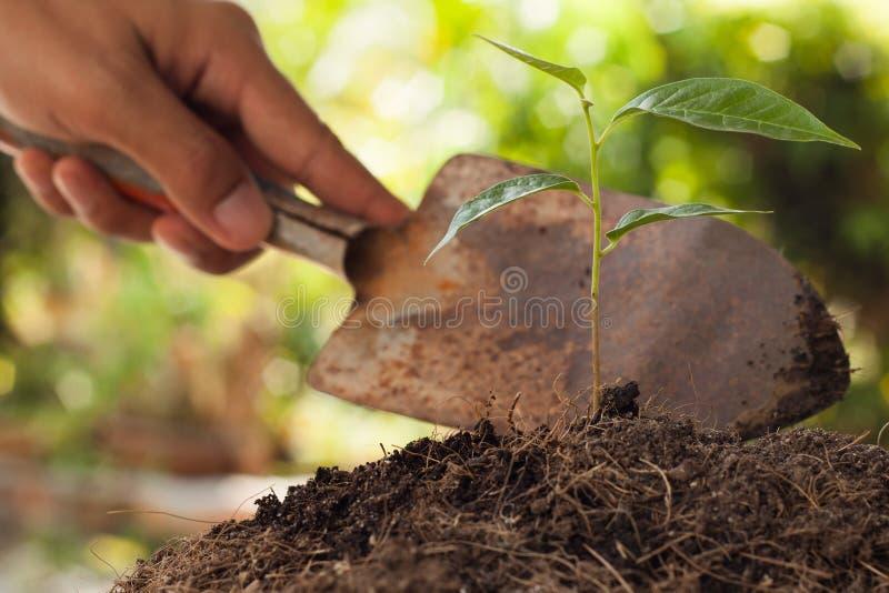 拿着铁锹年幼植物的农夫的手 库存图片