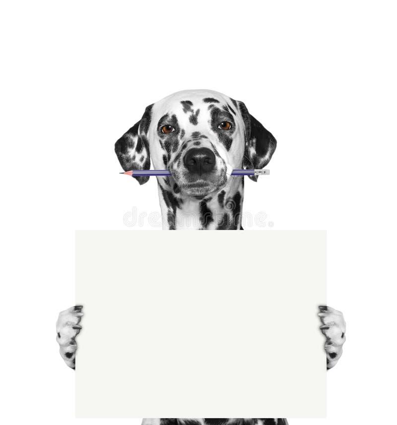 拿着铅笔和空白的狗 免版税库存图片