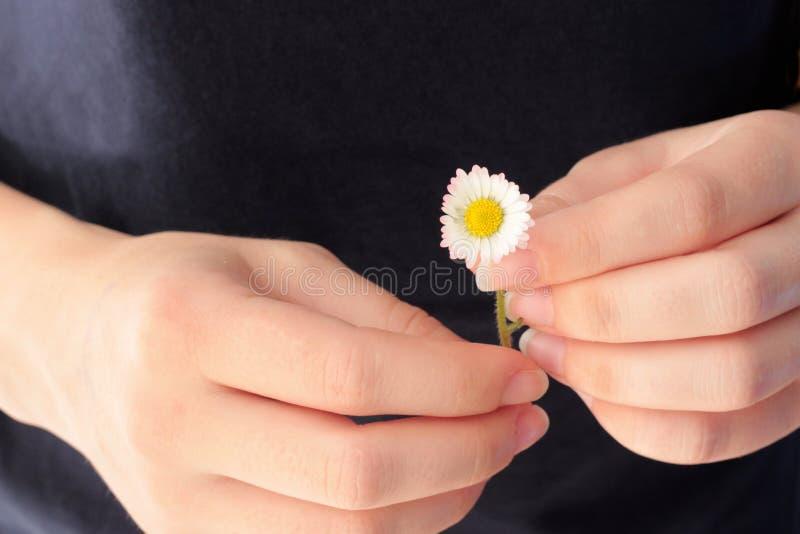 拿着雏菊的一个少妇的手 免版税库存图片