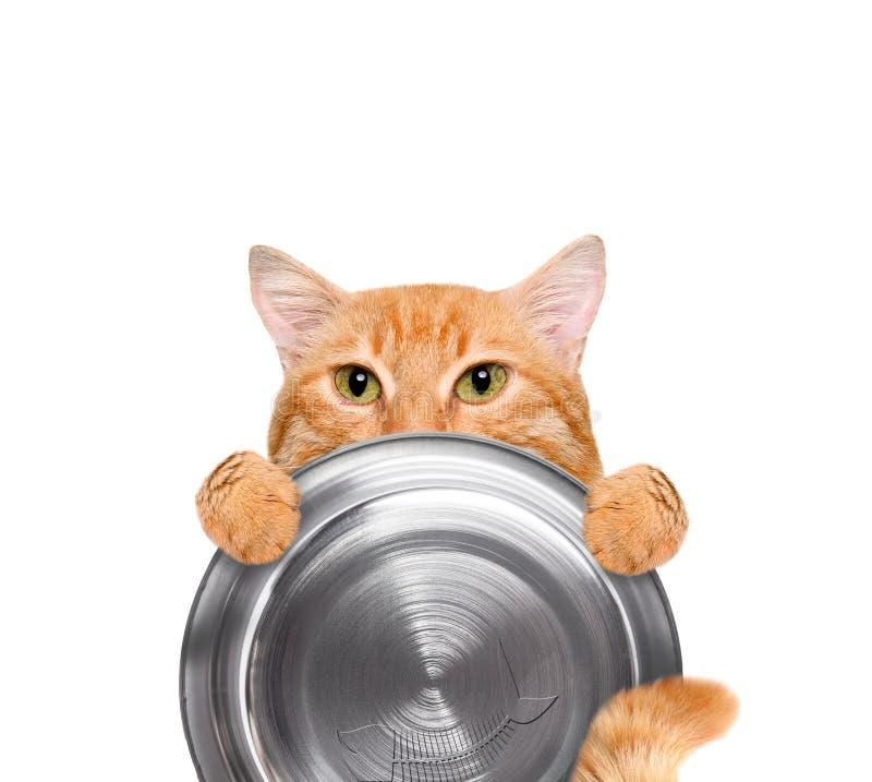 拿着食物碗的饥饿的猫 库存图片