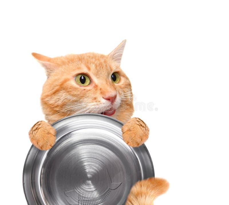 拿着食物碗的饥饿的猫 库存照片