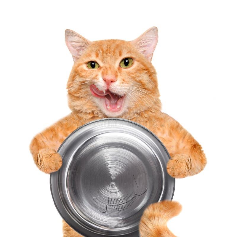 拿着食物碗的饥饿的猫 免版税库存图片