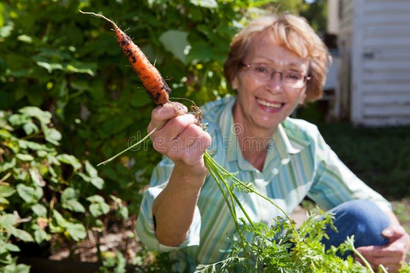 拿着高级妇女的红萝卜 库存图片