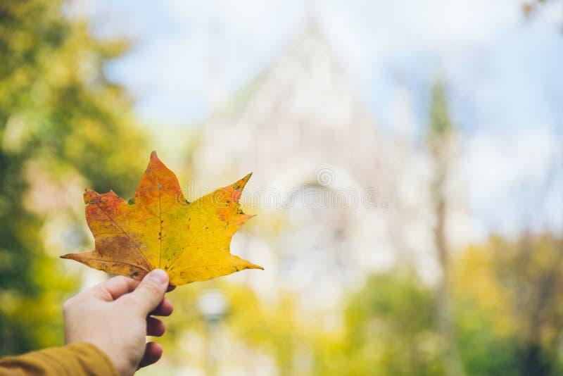 拿着黄色叶子的人手图片
