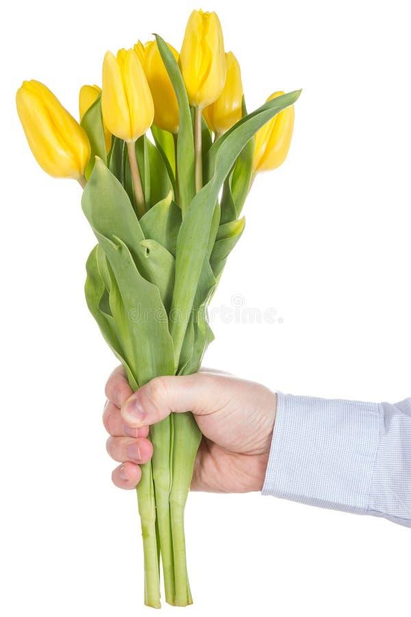 拿着黄色郁金香的现有量 库存图片