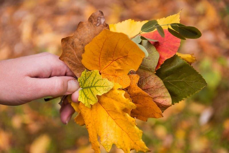 download 拿着黄色叶子的手 库存图片.图片