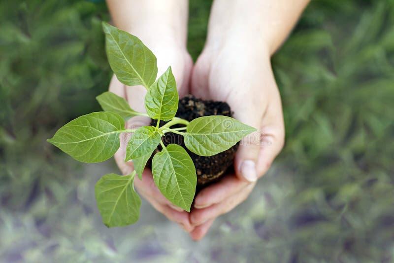 拿着绿色小植物的手. 背包, 期初的.图片