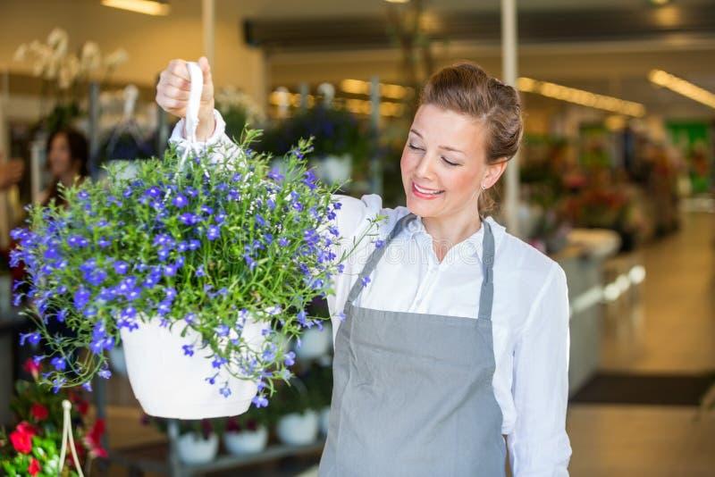 拿着紫色花厂的微笑的卖花人在商店 免版税库存图片