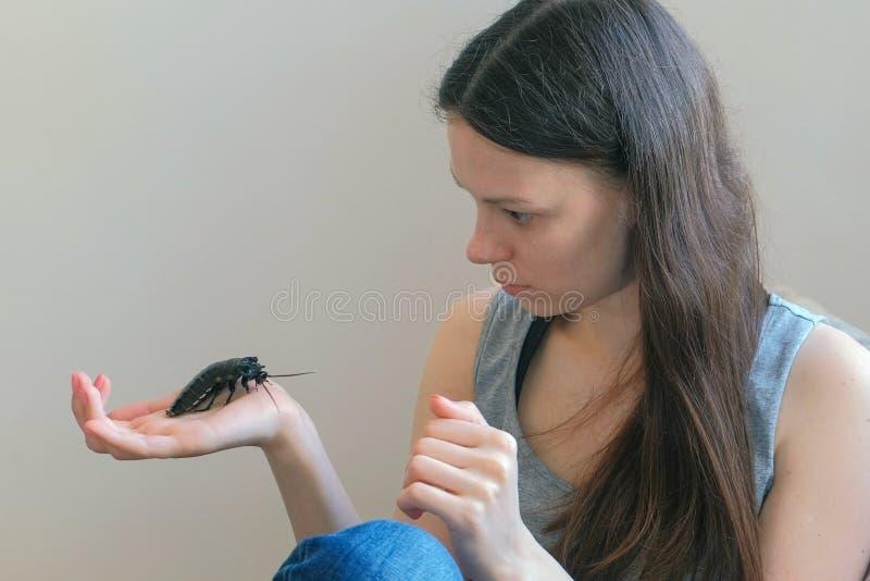 拿着Gromphadorhina portentosa的男性少妇发出嘘声的蟑螂,一马达加斯加的最大的种类 库存照片