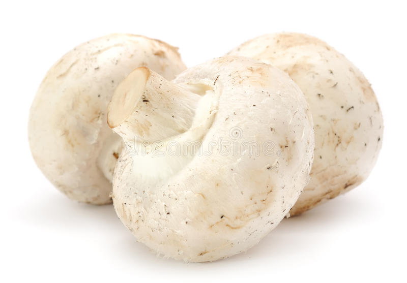 按钮蘑菇采蘑菇三白色 免版税库存照片