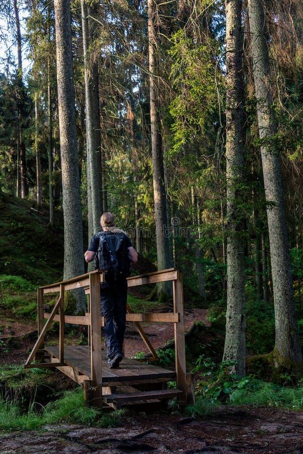 挑运的低谷森林 免版税库存照片