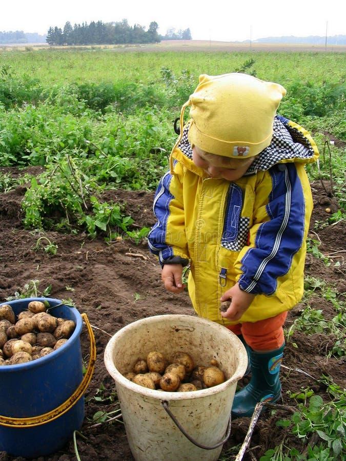 挖掘机的土豆 免版税库存照片