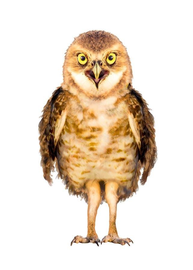 挖洞猫头鹰被隔绝的鸟字符 库存图片
