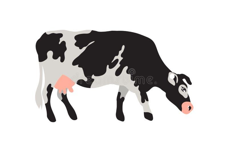 挤奶在黑,白色,灰色的被察觉的母牛,金子和桃红色 农业,种田,村庄生活 宠物 向量例证