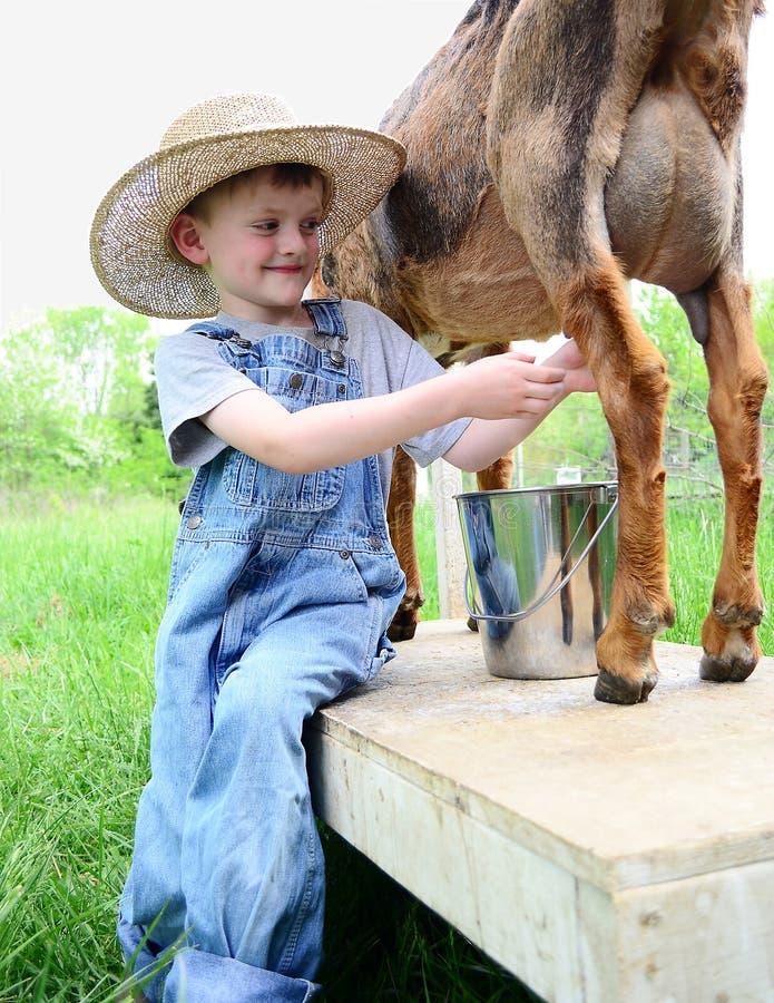 挤奶牛奶店山羊的男孩 免版税图库摄影