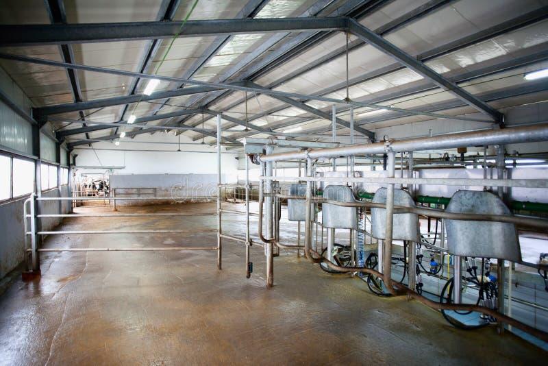 挤奶系统的母牛农场 库存照片