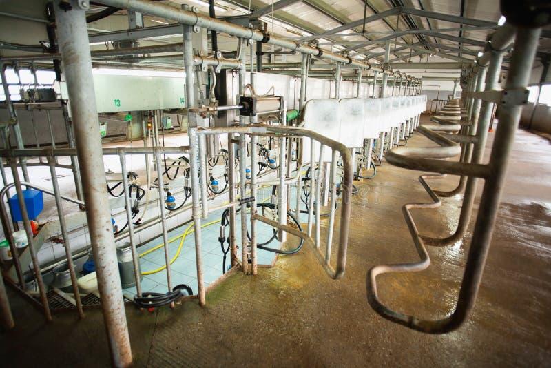 挤奶系统 库存照片