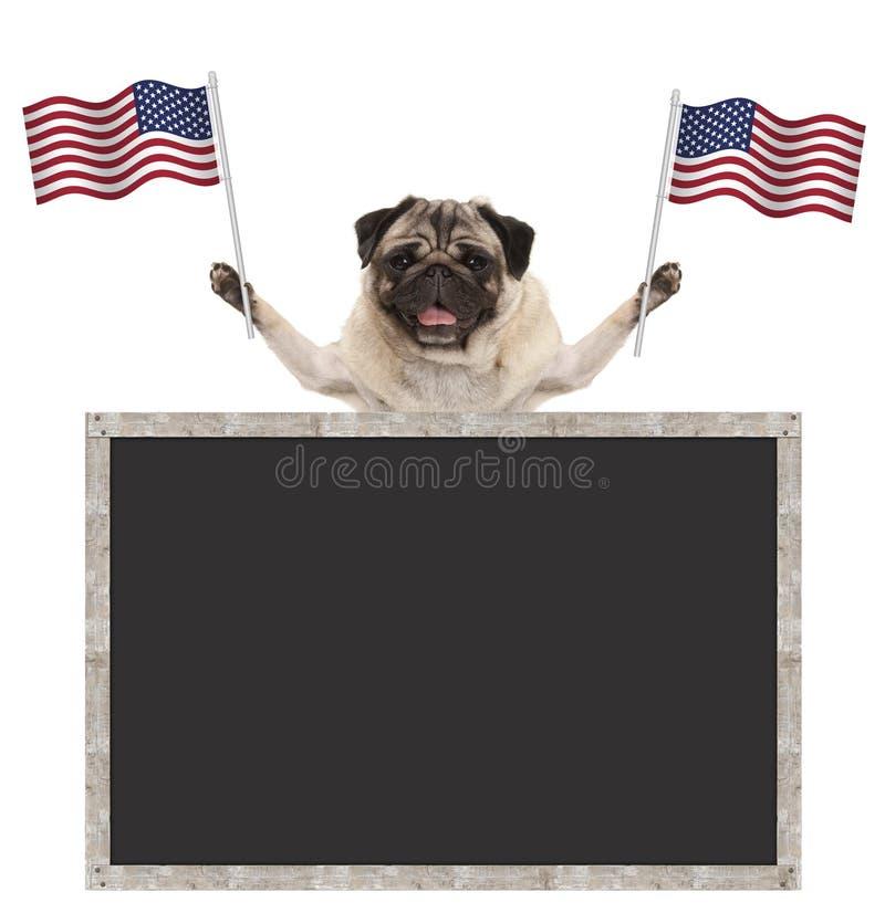 挥动美国的美国国旗的愉快的微笑的哈巴狗小狗,有空白的黑板的 库存照片