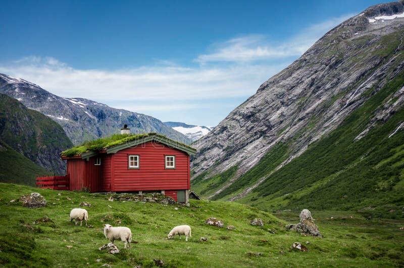 挪威人典型的草屋顶木房子在晴朗的斯堪的纳维亚全景 免版税库存照片