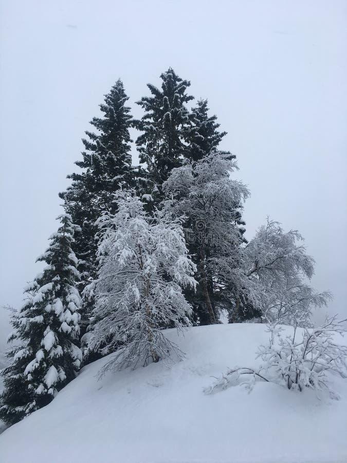 挪威冬天 免版税图库摄影