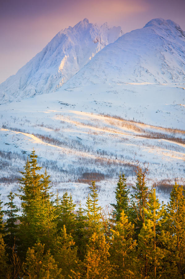 挪威北冰的阿尔卑斯 免版税图库摄影