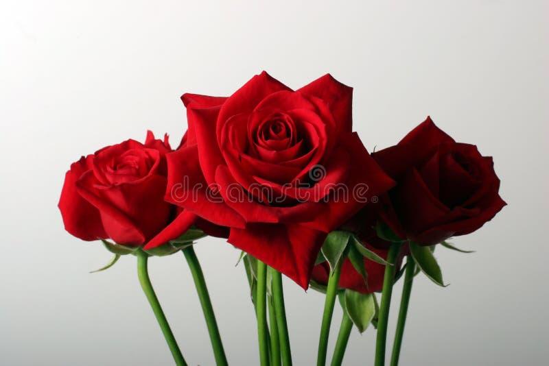 捆绑玫瑰 图库摄影