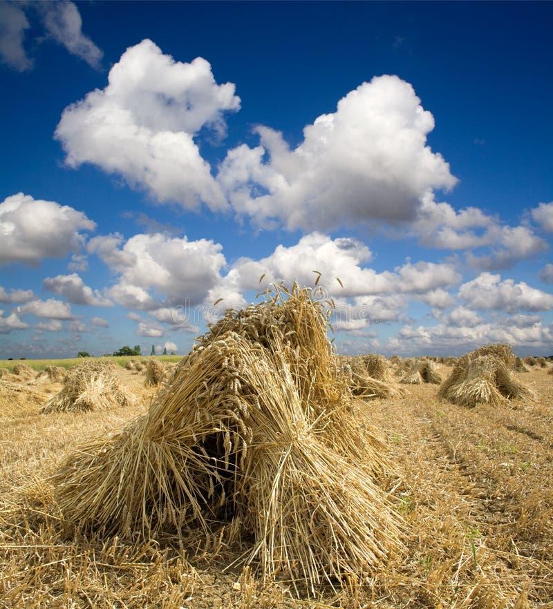 捆麦子 图库摄影