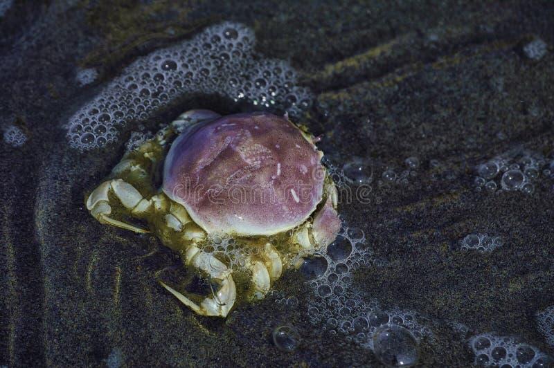 捉蟹海上、颜色、水和沙子 库存照片