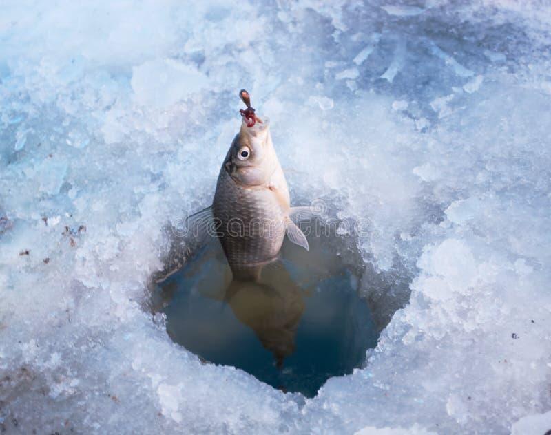 捕鱼冬天 库存图片
