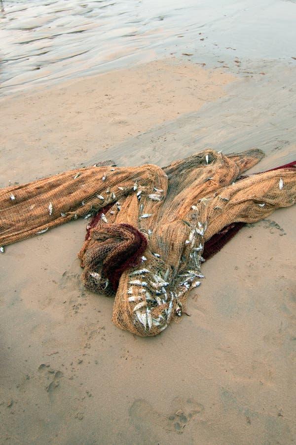 捕鱼网小鱼几天抓住在Nilaveli的在亭可马里瘦的Sri充分靠岸 免版税库存照片