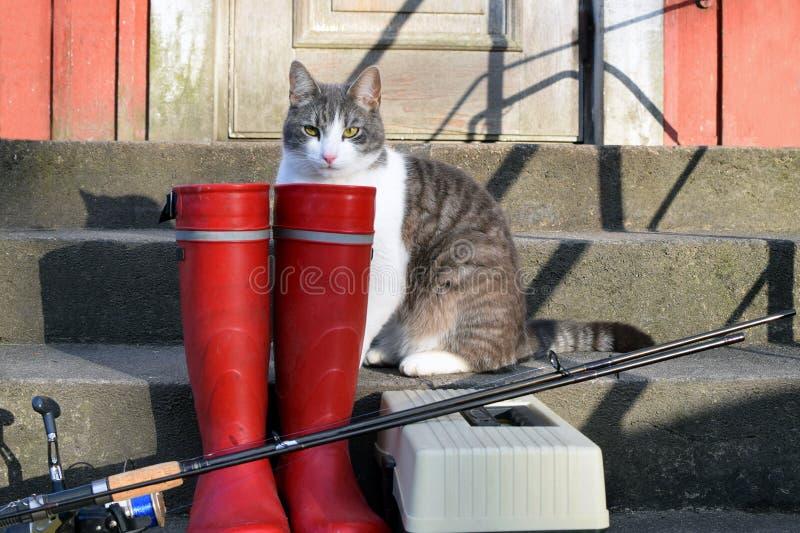 捕鱼设备和一只家猫 免版税库存图片