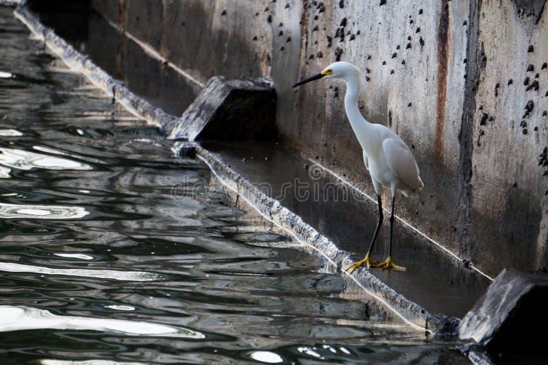 捕鱼 图库摄影