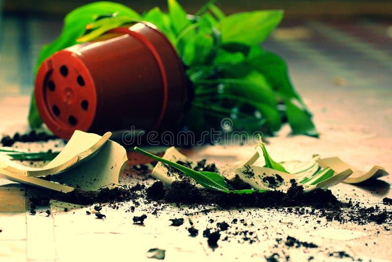 捣毁的植物罐 免版税库存照片