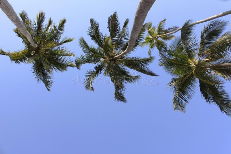 掌上型计算机三结构树 免版税库存照片