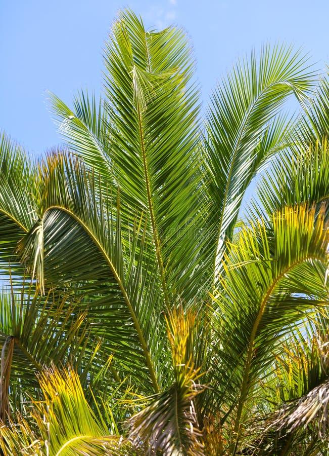 掌上型计算机公园结构树 亚热带气候 免版税库存图片