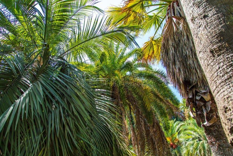 掌上型计算机公园结构树 亚热带气候 免版税库存照片