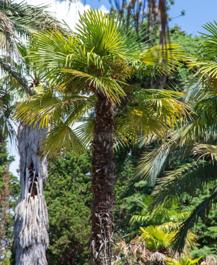 掌上型计算机公园结构树 亚热带气候 免版税图库摄影