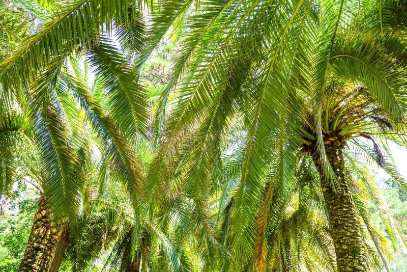 掌上型计算机公园结构树 亚热带气候 库存照片