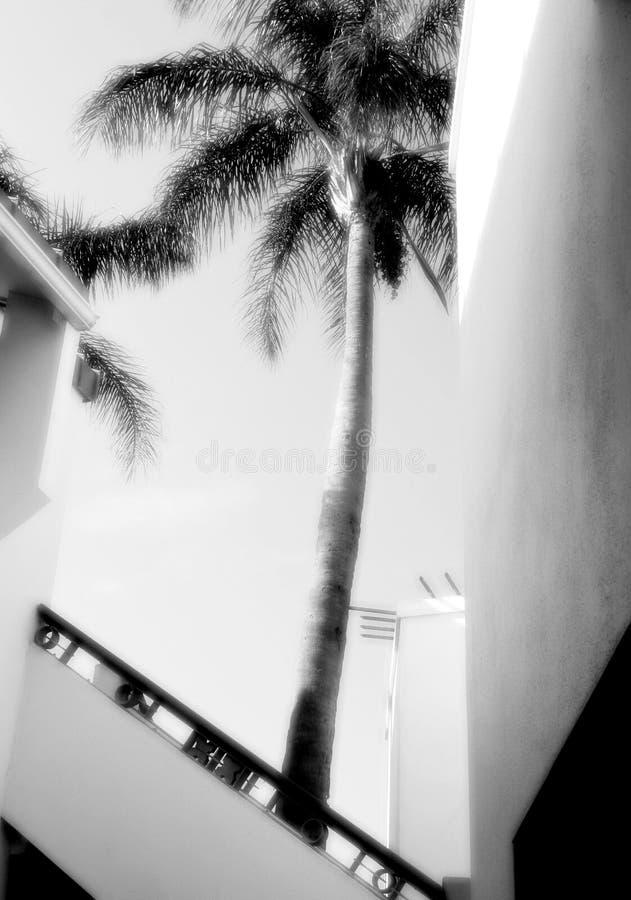 掌上型计算机照片射击结构树 免版税图库摄影