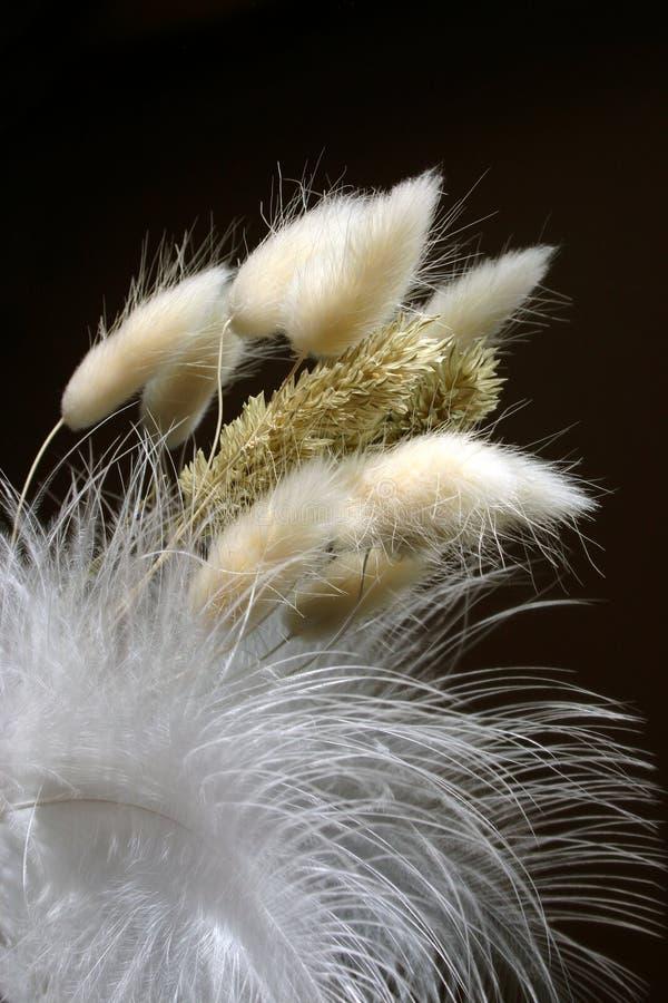 排列装饰羽毛 库存图片